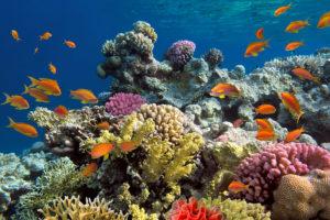 faune sous marine ile de la réunion voyager réunion